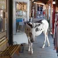 ezel in Oatman