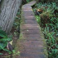 Willowbrae trail, Ucluelet