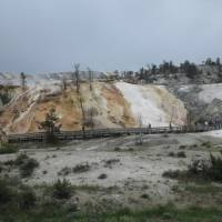 yellowstone Mommoth hot spring