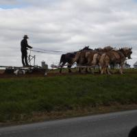 amish , back to the middeleeuwen
