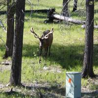 Wildlife on bow valley road from Banff to Lake Louise