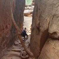 Emerald Pools Trail (Zion National Park)