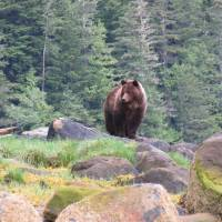 Grizzly tour